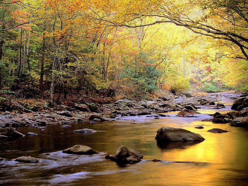 Pristine Stream in Autumn