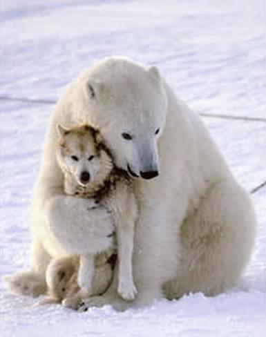 Polar-Bear-and-Husky