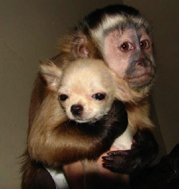 Buddies-Dog-and-Monkey