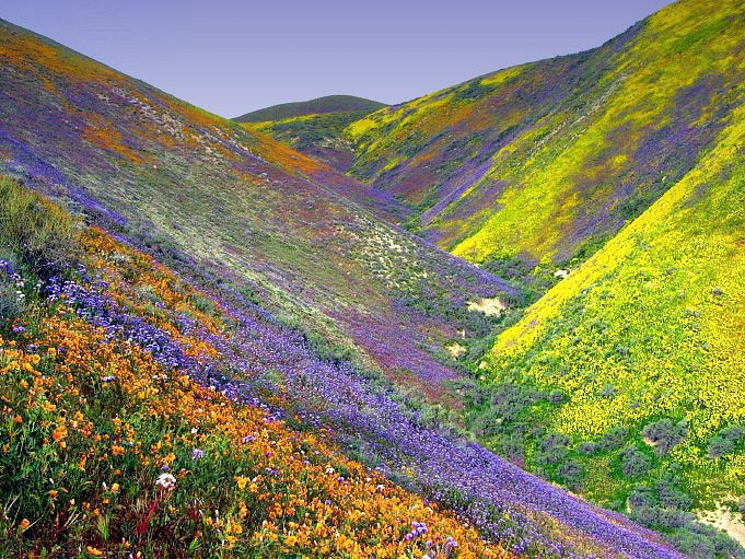Valley-Of-Flowers-Chamoli-Uttaranchal-India