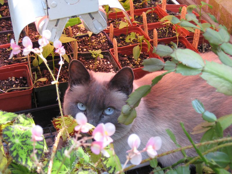 Missy-in-Greenhouse